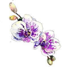 Most current No Cost Orchids acuarela Concepts Orchid, any blossom involving style plus splendor attractiveness, features more than 700 forms, above above 2 Watercolor Orchid Tattoo, Orchid Drawing, Watercolor And Ink, Watercolor Flowers, Watercolor Paintings, Drawing Flowers, Orchids Painting, Botanical Prints, Flower Art