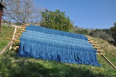Lana tinta con guado a La Campana - Woad dyed wool in La Campana