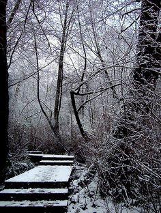 In Winter by Jessica Walker