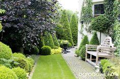 ogrodowisko hortensja limelight - Szukaj w Google
