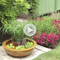 Learn how to easily create a container water garden! Watch here: http://www.bhg.com/videos/m/85234174/create-a-container-water-feature.htm?socsrc=bhgpin083114containergarden