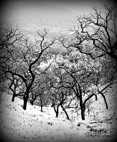 Frosted Spain - photograph by Clare Bevan. Fine art prints and posters for sale. #clarebevan #landscapephotography #blackandwhitephotography