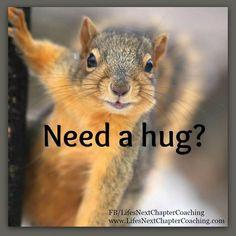 Funny Animal Memes, Cute Funny Animals, Animal Quotes, Cute Baby Animals, Funny Cute, Animals And Pets, Squirrel Memes, Cute Squirrel, Baby Squirrel