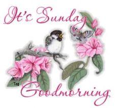 good+morning+sunday+images+with+doves | Good Sunday morning, Nanny, Susa, Roy and everybody.