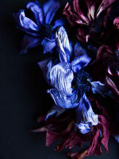 Les Fleurs Mortes 2 | Photography by Brittany Ambridge