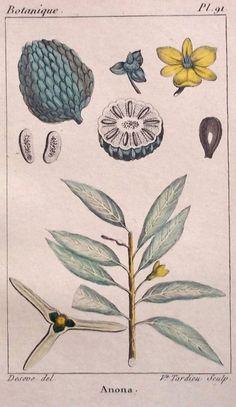 1828Dos pequeños grabados  de Botánica por CastafioreOldPrints, €12.00