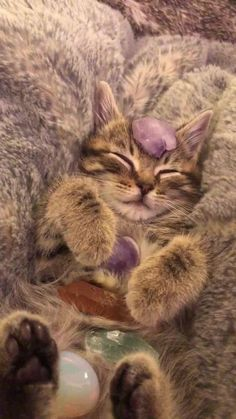 Fluffy Animals, Animals And Pets, Baby Cats, Cats And Kittens, I Love Cats, Cute Cats, Cat Aesthetic, Aesthetic Photo, Tier Fotos