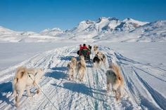 Take a dog sled tour in Greenland. | 13 Epic Adventure Vacations You'll Want To Take