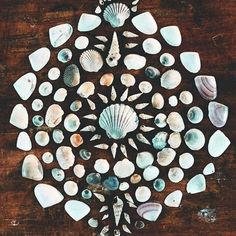 What to do with that collection? Shell-spiration from @bohobeachlover #beachlovers #seashells #beachfinds