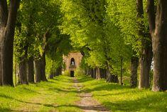 Liberati dalle emozioni: Il Tiglio, l'albero di riferimento che fa incontra...