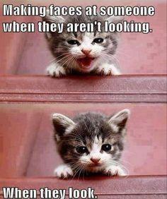 Cute Kitten Pretending To Be Cute