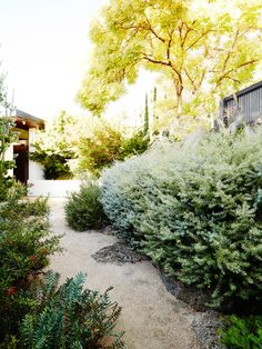 Brian and Trish Perkins A meandering decomposed granite pathway is flanked by native shrubs such as coastal rosemary (Westringia spp.), Grevillea and Banksia species. Photo – Annette O'Brien for The Design Files.