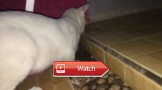 😸 Cat vs Mouse 😹 My cat just playing with shes dinner when mouse is fight for hes life 😼 on Pet Lovers 🐼