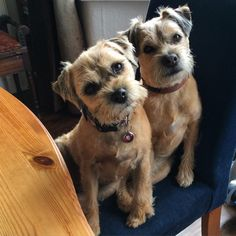 Food? Treats? No Outside! Yes Look Out Squirrel and Buggies and Leaves and........