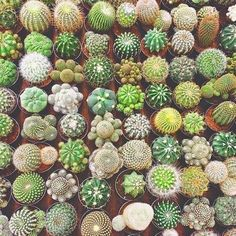 15 Awesome Indoor and Outdoor Cactus Plants Garden Ideas 8 - Outdoor plant - Plantio