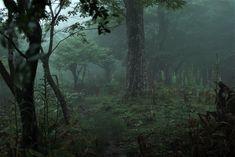 Dark Green Aesthetic, Nature Aesthetic, Goblin, Foggy Forest, Slytherin Aesthetic, Dark Paradise, Forest Fairy, Aesthetic Pictures, Twilight