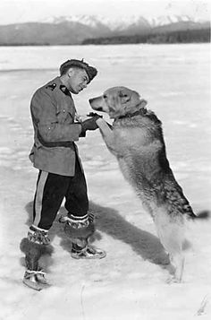 Taken in This is RCMP officer Joe Kessler and his favourite sled dog at Forty Mile, Yukon. This is his dog Skookum. I Am Canadian, Canadian History, Canadian Things, Military Working Dogs, National Police, Northwest Territories, O Canada, Police Dogs, Mans Best Friend