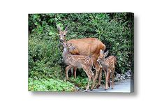 Fawn Baby Deer Baby Animals Deer Family by PeggyCollinsPhotoArt