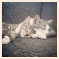 cuddling kitties :)