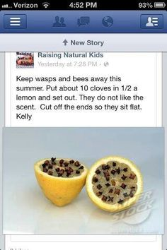 how to keep ants away from honey
