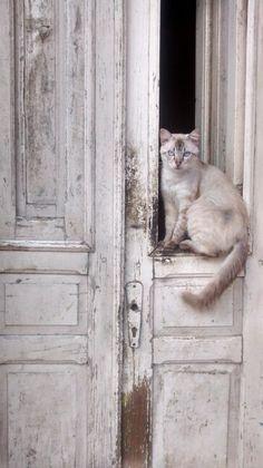 Gato de rua.