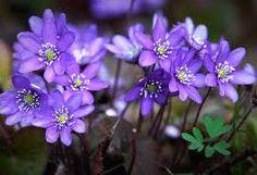 Kuvahaun tulos haulle kukat luonnossa