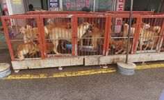 Victory! South Korea's Most Infamous Dog Meat Market Closes
