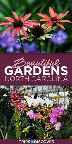 5 Beautiful North Carolina Gardens You Must Visit in Spring
