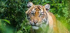 Kort verhaal: Door het oog van de tijger. Geschreven in 2013 en herschreven in 2017.