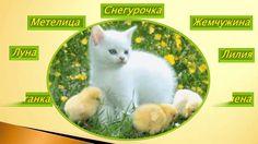 Необычные клички для белых котов и кошек!Смешные животные # 12