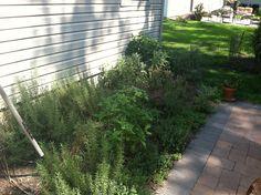 Heb garden August 2013