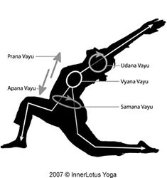 The Prana Vayus (the five winds), are subtle channels in which prana is distributed throughout our being.