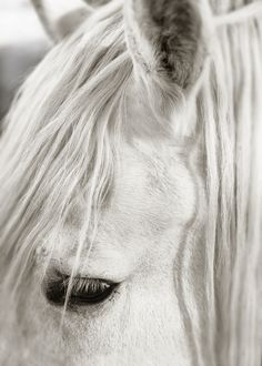 Focusing on White Horse II