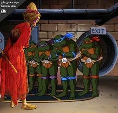 kaplumbağa terbiyecisi