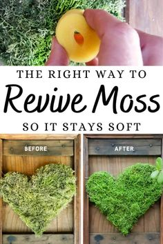 We love using moss in our craft projects, but unfortunately it dries and fades over time leaving your project looking bleh. Here's the right way to revive moss for craft projects and get it to look fresh and bouncy again. #tipsandtricks #freshenmoss #acraftymix #revivemoss #crafttutorial Diy Home Crafts, Diy Craft Projects, Fun Crafts, Wood Home Decor, Diy Home Decor, Home Decor Trends, Pumpkin Planter, Craft Cupboard, Lush Green