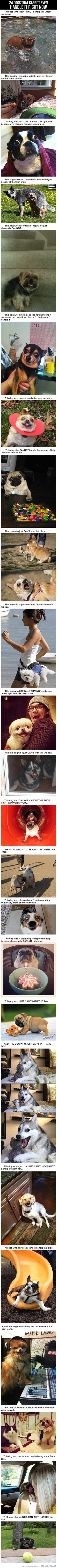 """This dog who kinda looks like he's handling it right now, but deep down, he can't...he just can't handle it"". I DIED."