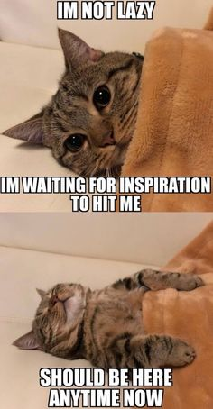 Cute animal memes · life am i right cute cat memes, cat memes hilarious, sad cat meme, Cute Cat Memes, Funny Animal Jokes, Cute Funny Animals, Funny Animal Pictures, Cute Baby Animals, Funny Memes, Funny Videos, Funny Dogs, Funny Puppies
