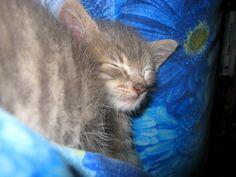 Mizu's sleep.