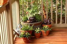 How to select the correct size pot for a Contaner Garden for Vegetables and Herbs in Pots on Deck