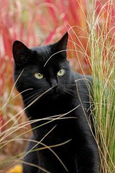 Chat noir dans l'herbe verte et rouge♥