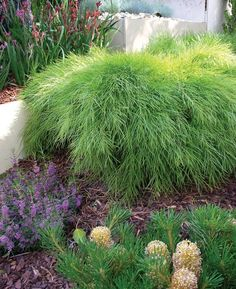 Search this vital image in order to visit the provided info on Dyi Landscaping Ideas Dyi Landscaping Ideas, Fence Landscaping, Front Garden Landscape, Landscape Design, Garden Design, Back Gardens, Outdoor Gardens, Bush Garden, Backyard Plants