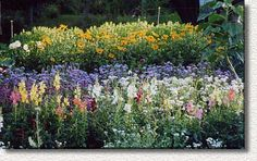 Cutting garden at Cottage Flowers in Bar Harbor, Maine