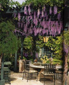 Pergola über die Terrasse und mit Wein bepflanzen = Schatten