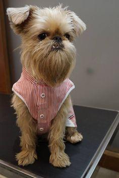 Cutie in a shirt