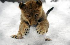Mmm snow. Belgrad Zoo, Serbia