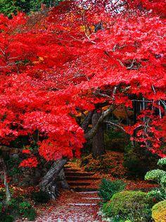 Hyogo, Japan