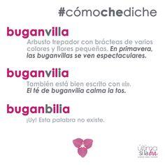 ¿Tú también le decías «buganbilia» a la buganvilla? Uuuups #cómochediche Nos gustan las palabras. Nos encanta la gramática. Somos Última Sílaba Comunicación.