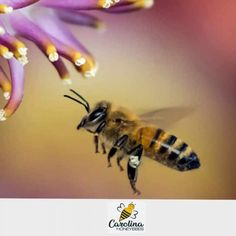 Learn about beekeeping and all things bee with Beekeeper Charlotte at Carolina Honeybees. Project Proposal Template, Proposal Templates, Beekeeping, Homestead, Draw, To Draw, Sketches, Painting, Tekenen