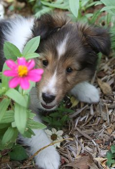 Peeking puppy