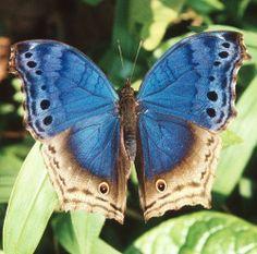 Bwindi Butterfly by Greg Miles, via Flickr